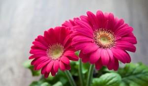 flower-6317