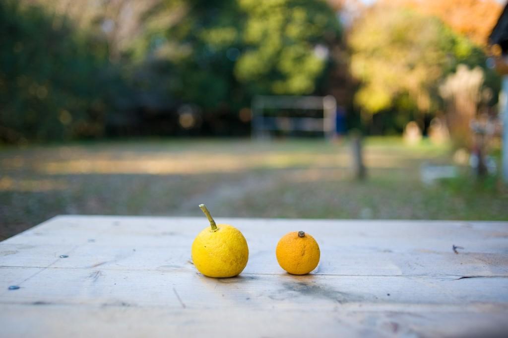 citrus-fruits_yuzu